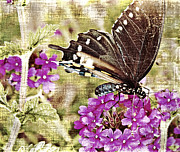 Susan Leggett Prints - Vintage Butterfly with Flower Print by Susan Leggett