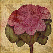 Digital Collage Prints - Vintage Cabbage Print by Bonnie Bruno