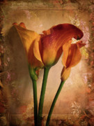Border Digital Art Metal Prints - Vintage Calla Lily Metal Print by Jessica Jenney