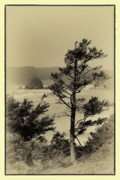Monolith Framed Prints - Vintage Cannon Beach Framed Print by David Patterson