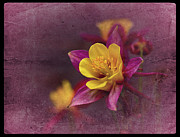 Columbine Photos - Vintage Columbine No. 3 by Richard Cummings