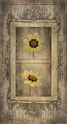 Tickseed Prints - Vintage Coreopsis Print by Betty LaRue