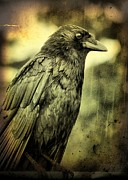 Vintage Style Posters - Vintage Crow Poster by Gothicolors And Crows