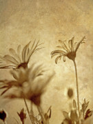 Grow Digital Art - Vintage Daisies. by Kelly Nelson