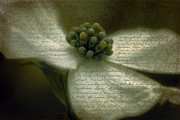 Write Prints - Vintage Dogwood 2 Print by Karen Lewis