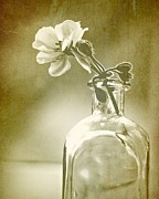 Glass Bottle Digital Art Prints - Vintage Geranium Print by Amy Neal