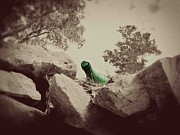 Western Photos - Vintage Green Bottle by Megan Chambers