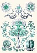 Vintage Jellyfish Print by Patruschka Hetterschij