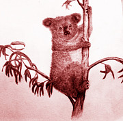 Koala Drawings - Vintage Koala  by Shane Whitlock