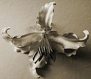 Still Life Photo Originals - Vintage Lily by Terence Davis