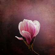 Bud Art - Vintage Magnolia by Jane Rix