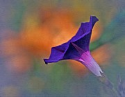 Morning Glory Art - Vintage Morning Glory No. 3 by Richard Cummings
