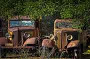 Old Pickup Photos - Vintage Old Trucks by Connie Cooper-Edwards