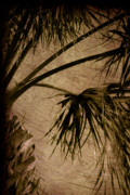 Abstract Palm Tree Prints - Vintage Palm Print by Susanne Van Hulst