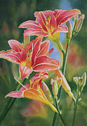 Lilies Paintings - Vintage Red Orange Lilies by Sharon Freeman