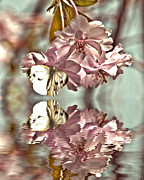 Pink Blossom Trees Posters - Vintage reflections Poster by Sharon Lisa Clarke