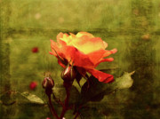 Tangerine Prints - Vintage Rose Print by Bonnie Bruno