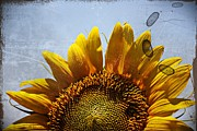 Kayecee Spain Acrylic Prints - Vintage Sunflower- Fine Art Acrylic Print by KayeCee Spain