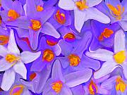 Photo Mixed Media - Viola Molti by Robert OP Parrish