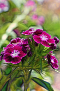 Violet Floral Imressions Print by Bill Tiepelman