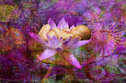 Photography By Mimi Prints - Violet Lotus Dream Baby Print by MiMi  Photography