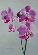 Watercolor Print Posters - Violet Orchid Poster by Sharon Freeman