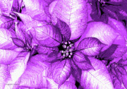Shimmer Prints - Violet Shimmer Print by DigiArt Diaries by Vicky Browning
