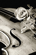 Violin Prints - Violin and Rose Print by M K  Miller