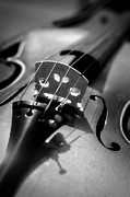 Arts Culture And Entertainment Metal Prints - Violin Metal Print by Danielle Donders - Mothership Photography