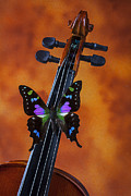 Concerts Framed Prints - Violin wings Framed Print by Garry Gay