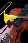 Music Tapestries Textiles Metal Prints - Violin with yellow calla lily Metal Print by Garry Gay