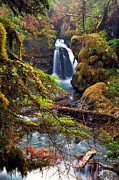 Alaska Prints - Virgin Greek Falls Print by Ed Boudreau