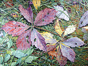 - Harlan Art - Virginia Creeper by - Harlan