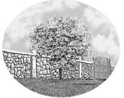 Jim Hubbard - Virginia-Dogwood