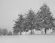 Winter Trees Photo Originals - Virginia Snow by Todd Hostetter