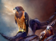 Spirit Hawk Art Framed Prints - Vision Of The Hawk 2 Framed Print by Carol Cavalaris