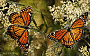 Orange And Black Butterfly Posters - Vision of Viceroys Poster by Bonnie Barry