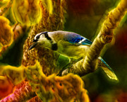 Bird On Tree Prints - Visions of a Blue Jay Print by Bill Tiepelman