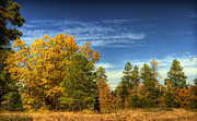 Fall Colors Photos - Visions of Fall  by Saija  Lehtonen