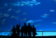 Nature Study Metal Prints - Visitors at an Aquarium Metal Print by Yali Shi