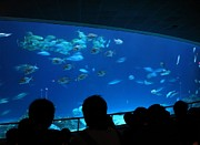 Nature Study Photo Prints - Visitors at Ocean Aquarium Print by Yali Shi