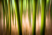 Abstract Landscape Art - Vitality - Abstract Panning Bamboo Landscape Photography by Dave Allen