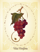 Carrieann Reda Posters - Vitis Vinifera Poster by CarrieAnn Reda