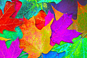 Ginny Framed Prints - Vivid Leaves 1 Framed Print by Ginny Gaura