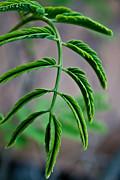 Vivid Plant Print by Erik Hovind
