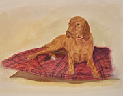 Vizsla Art - Vizsla Dog on Red Blanket by Phyllis Tarlow