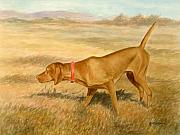 Vizsla Art - Vizsla Pointing by Phyllis Tarlow