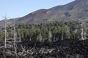 Bare Trees Posters - Volcanic Landscape Of Mount Etna Poster by Richard Roscoe