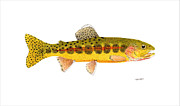 Salmon Paintings - Volcano Creek Golden Trout by Thom Glace