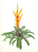 Epiphyte Painting Prints - Vriesea Dreamcicle Orange Print by Penrith Goff